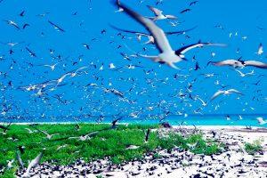 coast of bird island seychelles