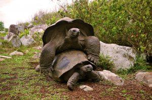 Fauna of Fregate Island